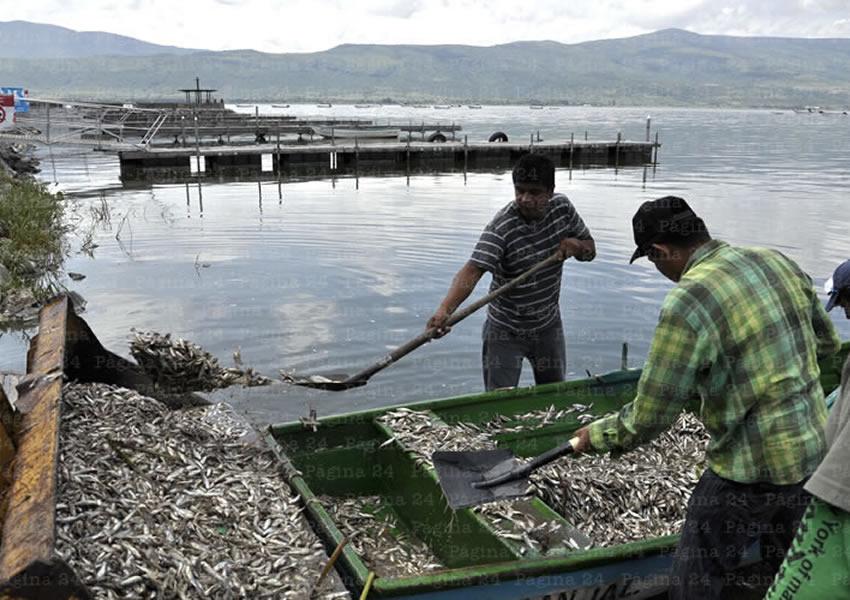 El PRI se apresuró en culparnos por muerte de peces: Del Toro