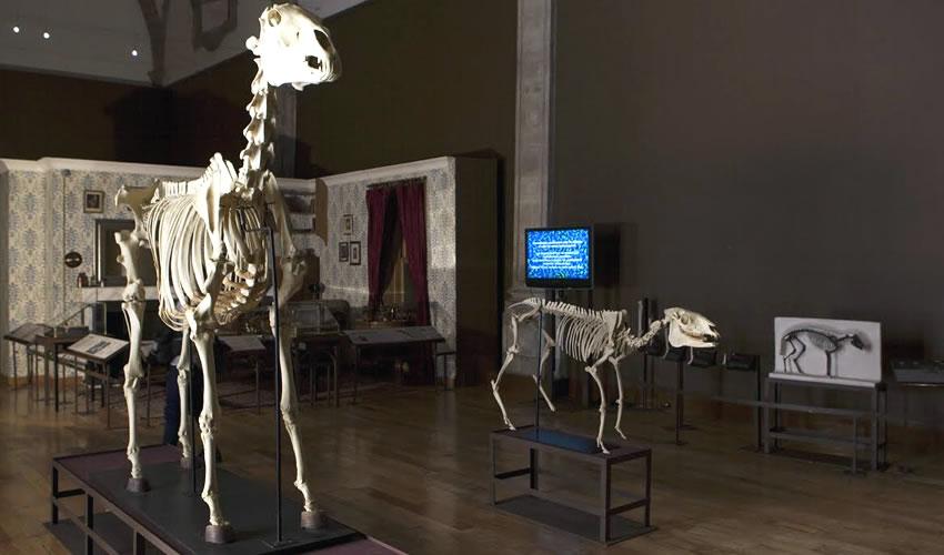 Jalisco se suma a celebración del Día Internacional de los Museos
