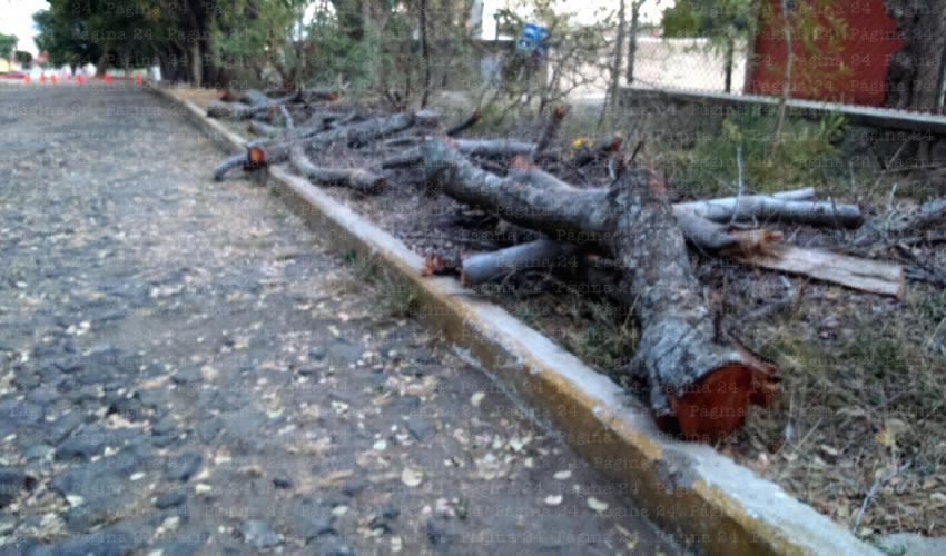 El miércoles 28 de enero el municipio de Guadalajara se reunirá con vecinos para evitar la tala de cientos de árboles en el parque, luego de que los habitantes se manifestaron en contra de la construcción de más obras en el interior del parque Huentitán/Fotos: Archivo Página 24