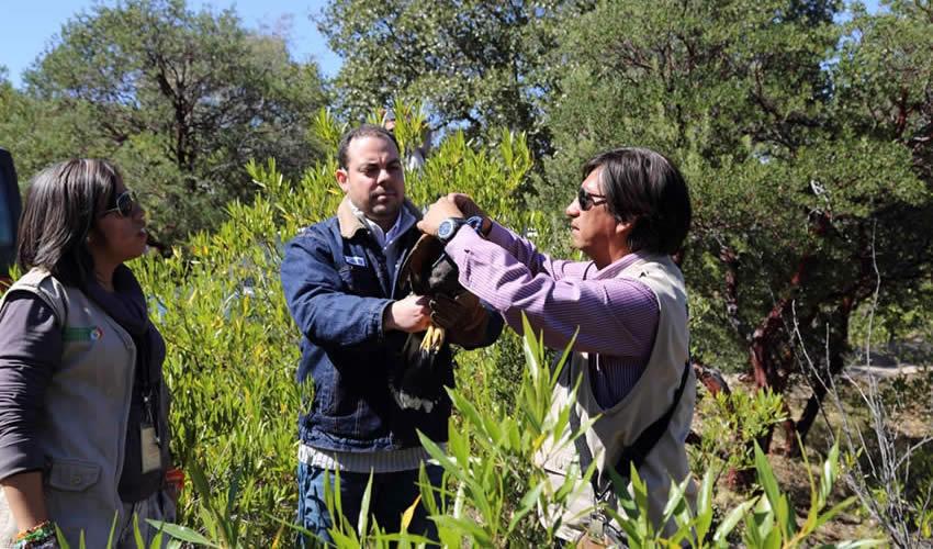 Realiza Tarea Primordial Para Devolver a la Fauna Silvestre a su Hábitat Natural el CRAR