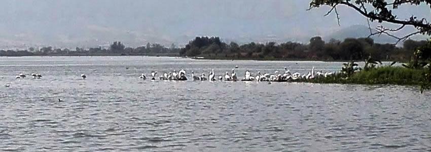 Se olvidan turistas  de la presa La Vega
