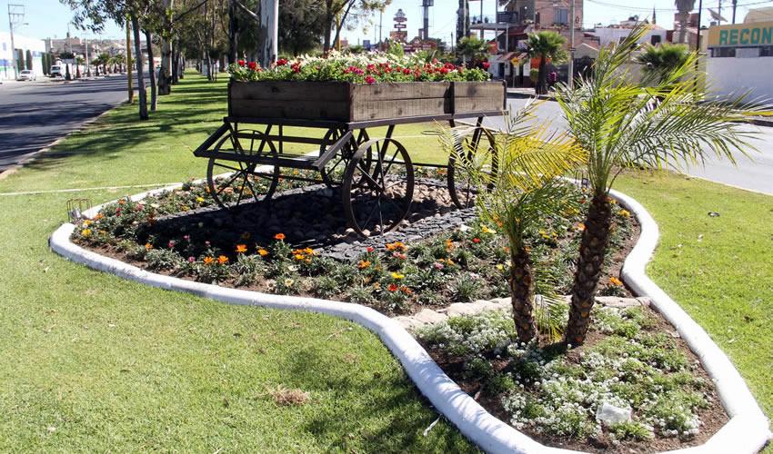 Instala el municipio en los camellones elementos for Vegetacion ornamental