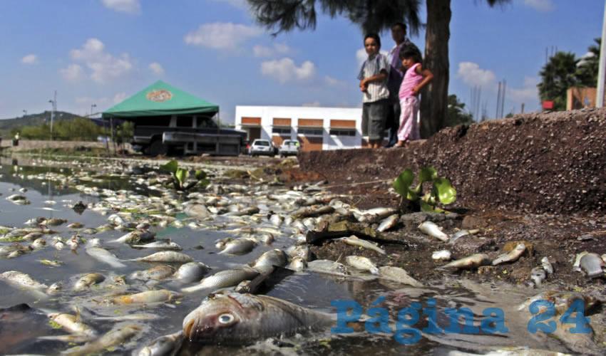 Ecocidio En Cajititl 225 N Por Agua Contaminada Y Falta De