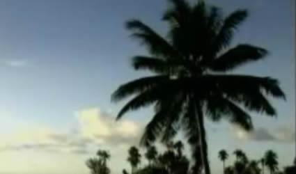 La Palma de Coco