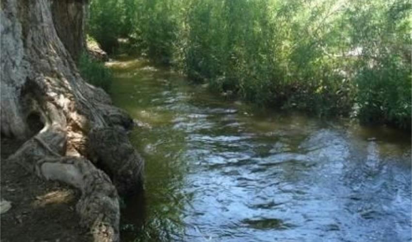 """""""…nos entretenía ver cómo brotaba el agua formando bolitas de tierra que parecían girar"""""""