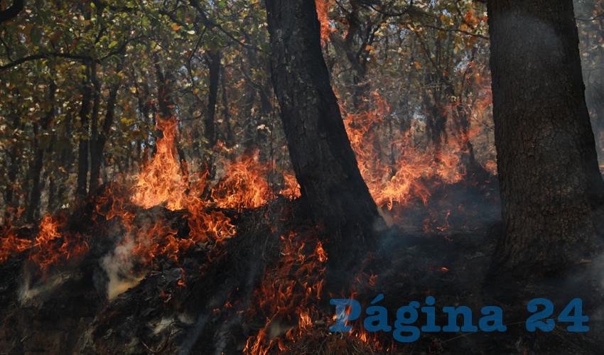 Emergencia Atmosférica en Guadalajara por Voraz Incendio Forestal