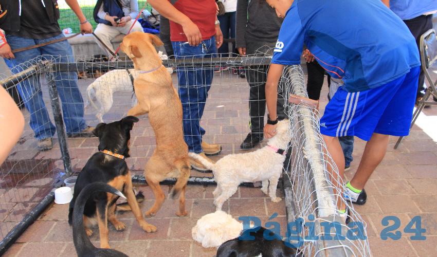 Esta actividad es desarrollada por la asociación de rescate y cuidado animal, denominada Dog Love Zacatecas (Foto Rocío Castro Alvarado)