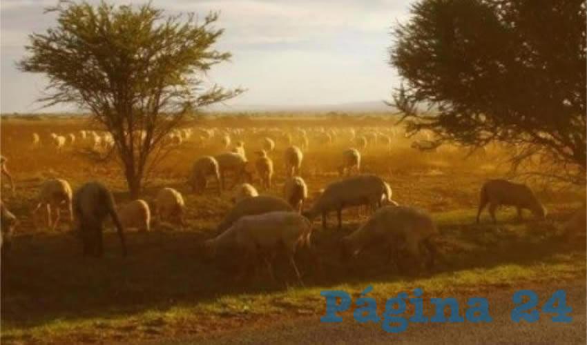 Intentan asesinar a ganadero (Foto: Cortesía)
