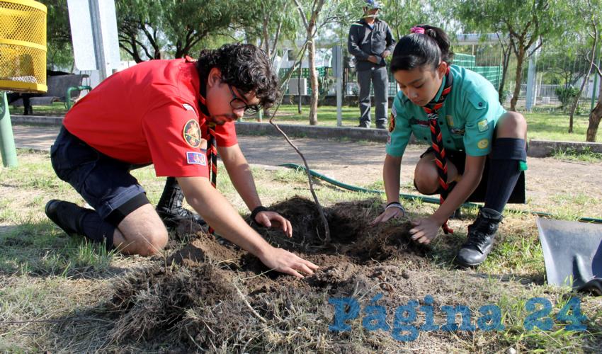 Continúan los Trabajos de Limpieza y Reforestación en el Cerrito de la Cruz
