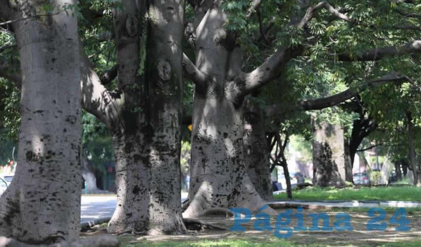 Autoridades dejan árboles  singulares a su suerte