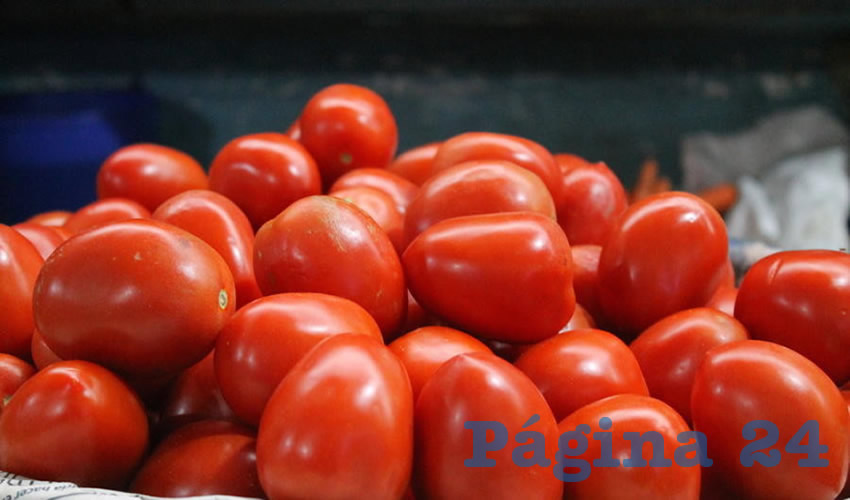 Altera producción de jitomate seguridad alimentaria de Zapotlán el Grande