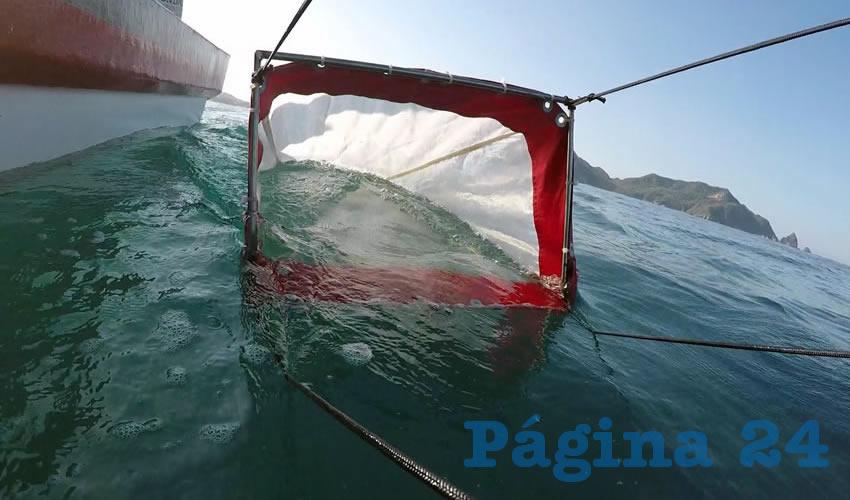 Al estar en contacto con los microplásticos, algunas especies marinas podrían estar transfiriendo fibras a los organismos más grandes que los ingieren, entre ellos a los humanos, por lo cual con esto también estarían traspasando los contaminantes que contienen/Fotos: Cortesía