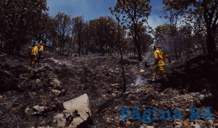 Fue gracias a la ardua labor de cientos de elementos de decenas de dependencias municipales, estatales y federales que se pudo contener el voraz incendio/Fotos: Twitter @EnriqueAlfaro