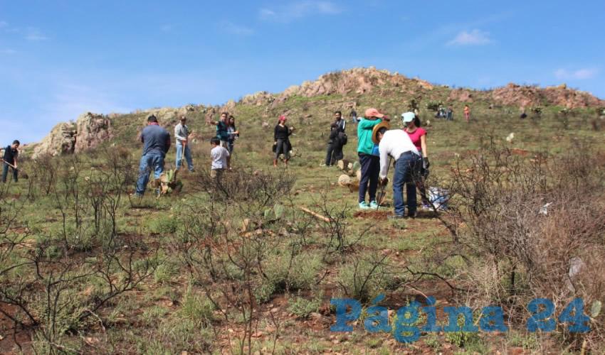 """Vecinos de Colinas del Padre, Lomas del Lago, Barrios Sierra y Autoridades Reforestan el """"Cerro del Padre"""""""