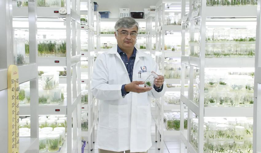 La UAA Realiza la Conservación de Plantas  Endémicas Mediante Método de Clonación