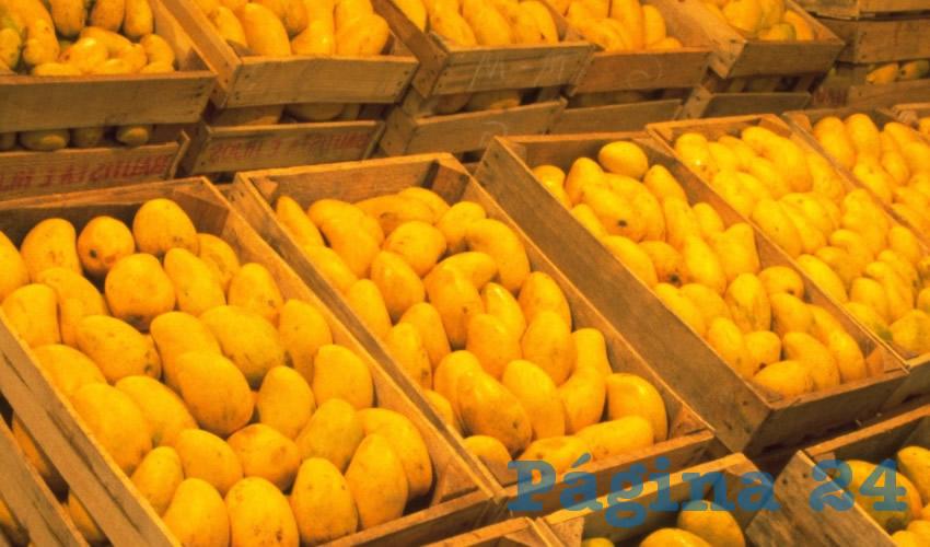 Sinaloa, Nayarit, Guerrero, Chiapas y Oaxaca, que juntos aportan el 77 % de la producción nacional de esta fruta